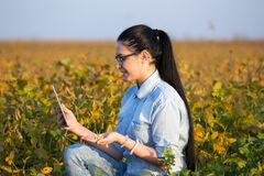 Agronomist with tablet in soybean field Stock Images