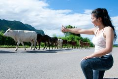 Pretty young Asian woman enjoy summer day with cow on a road. Stock Photos