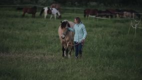A beautiful woman leads a horse outdoors. A herd of horses in the background stock video footage
