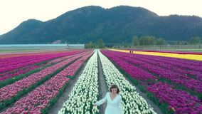 A pretty young brunette woman in a white summer dress running through a tulip field at sunset. stock footage