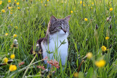 A pretty young cat stock images