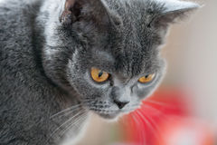 Pretty young cat Stock Photos