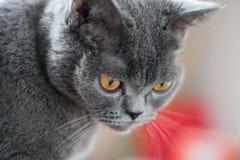 Pretty young cat. Closeup shot Stock Photos