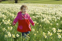 A pretty young child in a field of daffodils. Stock Photo