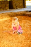 Little Girl Fall Harvest. Pretty Young Child Playing in fall harvest Corn Pile Royalty Free Stock Images