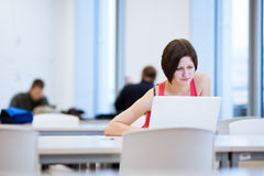 Pretty young college student studying in the library Stock Images