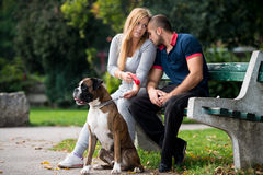 Pretty Young Family With Dogs Royalty Free Stock Image