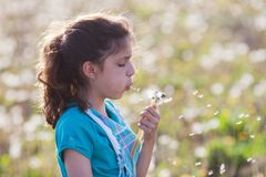 Pretty young girl blows at dandelion blossom Stock Images