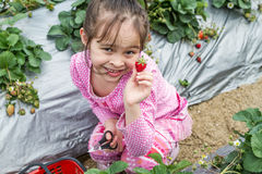 Pretty Young Girl Picking Fruit at Strawberry Farm Royalty Free Stock Images