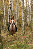 Pretty young girl riding a horse without any equipment in autumn Royalty Free Stock Image