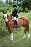 Pretty young girl showing her horse. Young girl showing her hunter/jumper horse - clydesdale thoroughbred cross royalty free stock photo