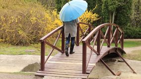 Pretty young red head woman with the blue umbrella. On the bridge in spring park. Green trees and forsythia blossoms background stock video footage