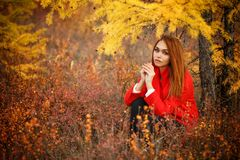 Woman in an autumn forest. Pretty young woman in an autumn forest royalty free stock image