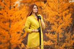 Woman in an autumn forest. Pretty young woman in an autumn forest stock image