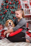Pretty young woman with beagle dog sit near decorated New Year tree. Pretty young woman with lovely beagle dog who shows tongue sit near decorated New Year tree royalty free stock photo