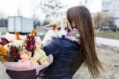 Pretty young woman with bouquet of flowers holding small dog, against background of city street. Back view stock photo