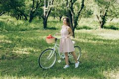 Pretty young woman in dress holding retro bicycle with wicker basket full of ripe apples. At countryside stock images