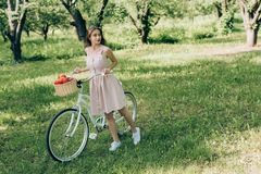 Pretty young woman in dress holding retro bicycle with wicker basket full of ripe apples. At countryside stock photo