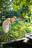 Pretty, young woman gardening in her garden Stock Images