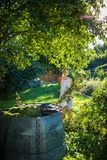 Pretty, young woman gardening in her garden. Cutting branches, preparing the orchard for the winter Royalty Free Stock Images