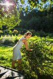 Pretty, young woman gardening in her garden stock photography
