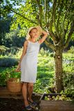 Pretty, young woman gardening in her garden. Harvesting organic apples - looking very happy with the results Stock Image
