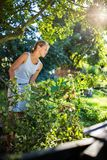 Pretty, young woman gardening in her garden. Cutting branches, preparing the orchard for the winter Stock Photos