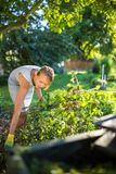 Pretty, young woman gardening in her garden. Cutting branches, preparing the orchard for the winter Royalty Free Stock Photos