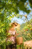 Pretty, young woman gardening in her garden. Cutting branches, preparing the orchard for the winter Stock Images