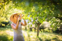 Pretty, young woman gardening in her garden. Cutting branches, taking care of her lovely orchard Stock Photos