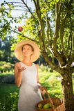 Pretty, young woman gardening in her garden. Harvesting organic apples - looking very happy with the results Stock Images