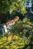 Pretty, young woman gardening in her garden. Harvesting organic apples - looking very happy with the results Royalty Free Stock Image