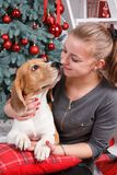 A pretty young lady hugging cute beagle dog as they are looking at each other on the New Year eve. A pretty young woman hugging cute beagle dog as they are Royalty Free Stock Photos