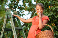 Pretty, young woman picking apricots lit by warm summer evening Royalty Free Stock Photography