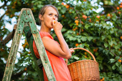 Pretty, young woman picking apricots lit by warm summer evening Stock Photos