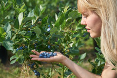 Pretty young woman is picking fruits on a blueberry field. Stock Images