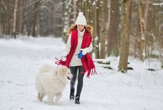 Pretty Young Woman in Snowy Winter Forest Park Walking Playing with her Dog. White Samoyed Seasonal stock photo