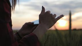 Pretty young woman with tablet computer working in wheat field at sunset. The girl uses a tablet, plans to harvest stock video footage