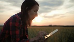 Pretty young woman with tablet computer working in wheat field at sunset. The girl uses a tablet, plans to harvest stock footage