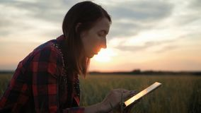 Pretty young woman with tablet computer working in wheat field at sunset. The girl uses a tablet, plans to harvest. Tapping the tablet screen. The concept of stock video