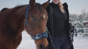Pretty young woman walks with a beautiful white horse leading her holding a stirrup over a snow-covered country ranch. Cute blonde walks with a beautiful white stock footage