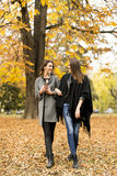 Pretty young women in autumn park Royalty Free Stock Photography