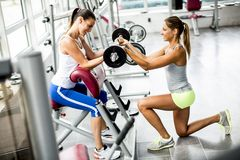 Pretty young women have weight training in gym Stock Images