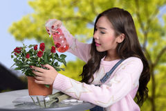 Prety girl and red rose. Pretty girl watering red rose in clay jardiniere by spray bottle in her hand Stock Photo
