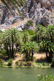 Preveli gorge where there are palm trees and the river. Stock Image