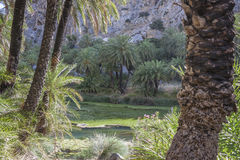Preveli, Palm Grove Stock Photo