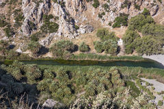Preveli, palm grove Stock Images