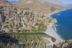 Preveli, palm grove Stock Image