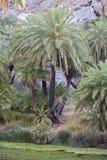 Preveli, palmeto Fotografia Stock Libera da Diritti