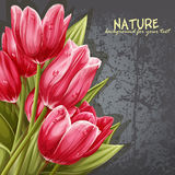 Preview background bouquet of pink tulips for your text Royalty Free Stock Image